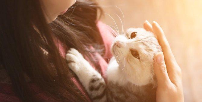 ダレノガレ明美さんも猫好き芸能人!名前やエピソード