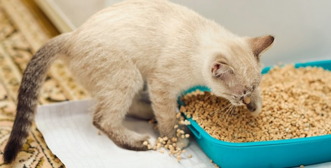 猫砂の種類と愛猫に合った選び方のコツ