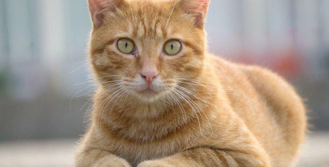 さくら猫とは?なんのために耳をVの字にしているの?