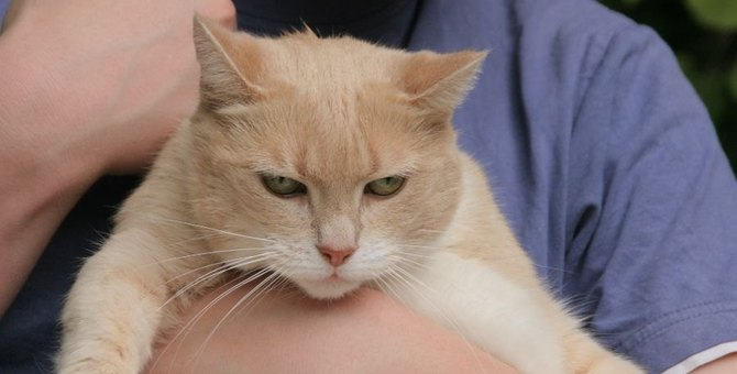 猫が飼い主に『不満を訴えている』仕草や行動7つ