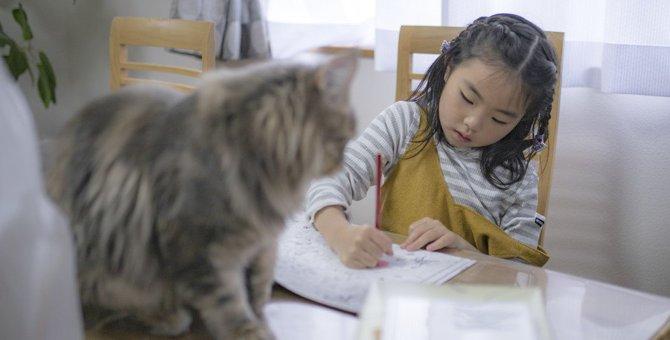かわいい猫の塗り絵をご紹介!大人も楽しめる商品まで