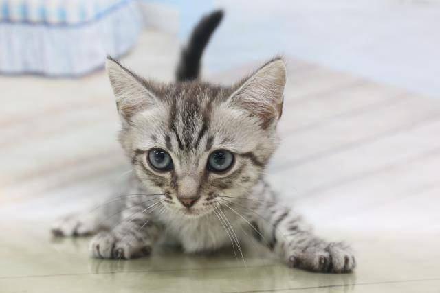 寝苦しい?猫が夜間しょっちゅう移動する理由3つ