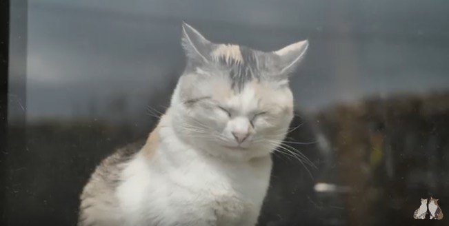三毛猫姉さんが日向ぼっこから脚を真一文字に伸ばして眠るまで