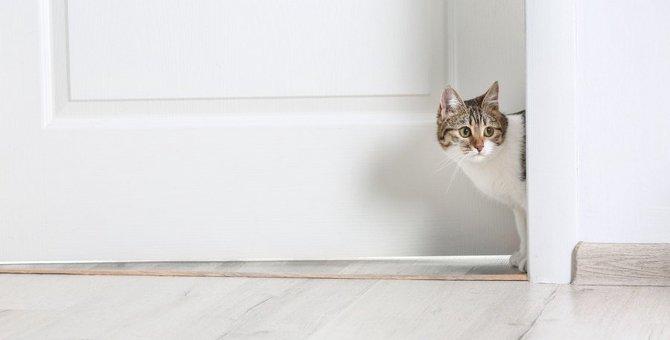 部屋を出たり入ったりする猫の心理7つ