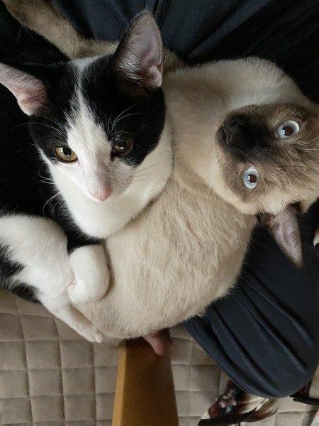 今すぐやめて!無意識に猫を困らせている行為3つ