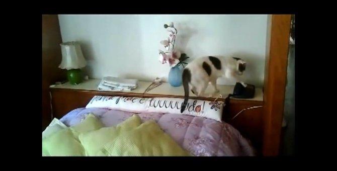 「はい、もしもしにゃ」電話対応が上手なおしゃべり猫ちゃん