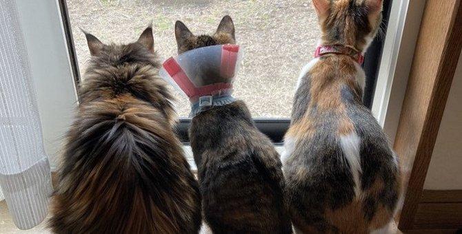 新たな猫を迎えたい!先住猫との『相性』で考慮すべきポイント3つ