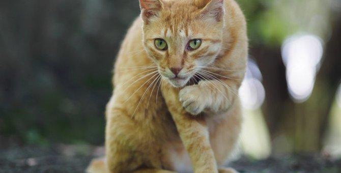野良猫と仲良くなれる人の特徴5つ