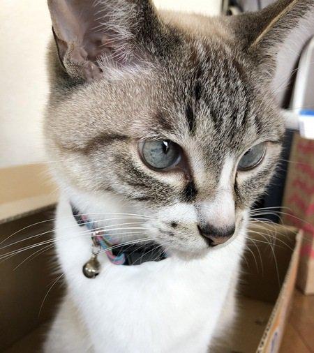 猫好きさんメロメロ♡猫の胸キュンシーン9つ
