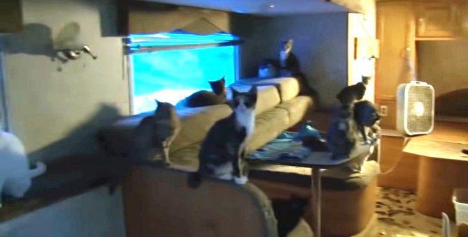 保護施設じゃなかったの…?700匹以上の猫を劣悪な環境から救え