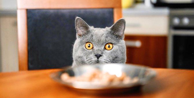猫のご飯はお家のどこであげるべき?食べやすいと感じる6つの場所