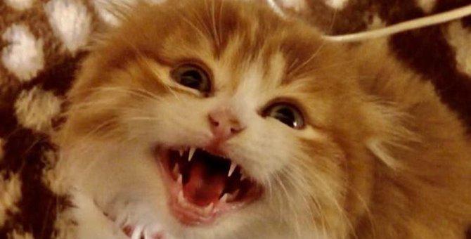猫が鳴きながら飼い主に寄ってくる時の心理5選