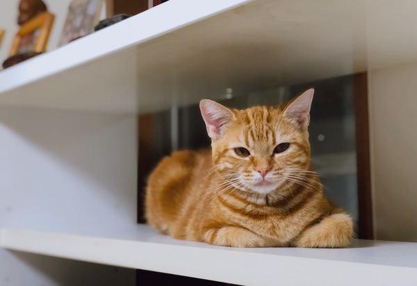 飼い主にドン引き…猫が本気で嫌がること4つ