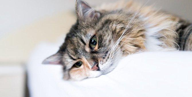 猫がなりやすい口内炎の危険な症状5つ