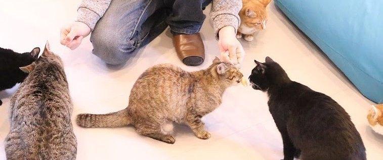 岡山の猫カフェ最新のおすすめ6選!子連れで行けるお店も