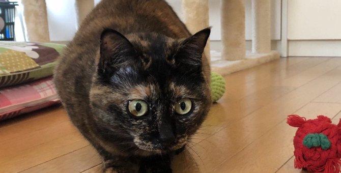 猫が『遊んでもらいたいとき』にする行動6選