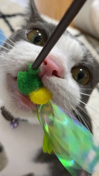 猫を飼うときに必要な最低限のおもちゃ5つ!これがあれば猫も快適!