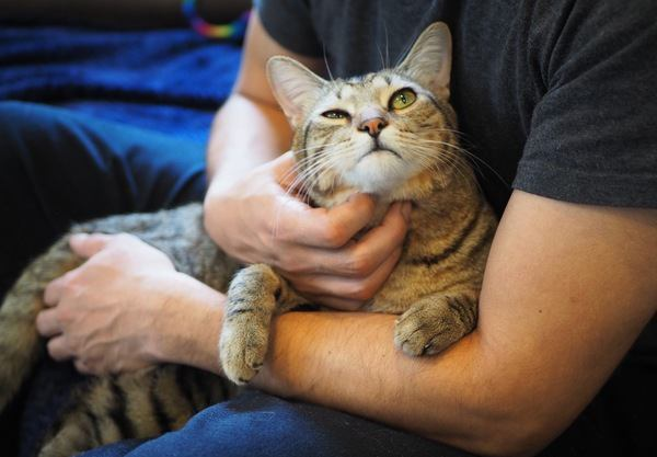 猫が撫でるのをやめてほしい時にする仕草5つ