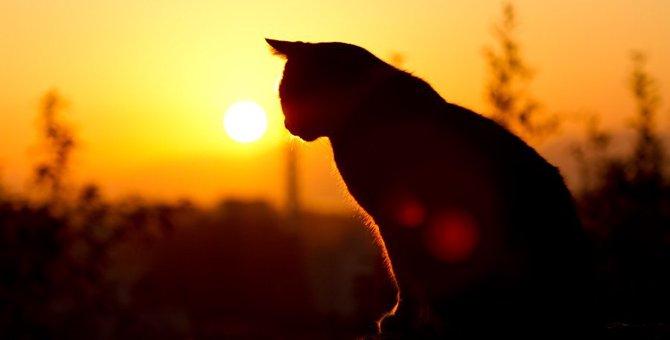 猫がぼんやり黄昏れる9つの理由