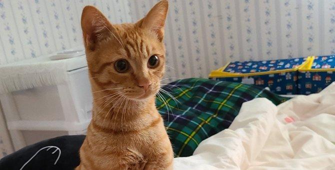 立ったー!今にも二足歩行しだしそうな猫さんが話題♡