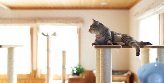 猫の最悪なトラブルに繋がる『キャットタワー』3種!安全に使えるキャットタワーの特徴とは?