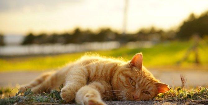 猫の安楽死を選ぶ時。辛そうな姿を見ていられない…