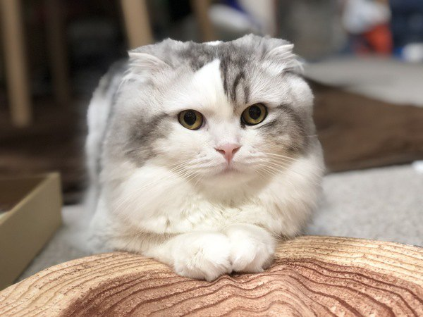 猫が喜ぶ『愛情表現』の方法5つ
