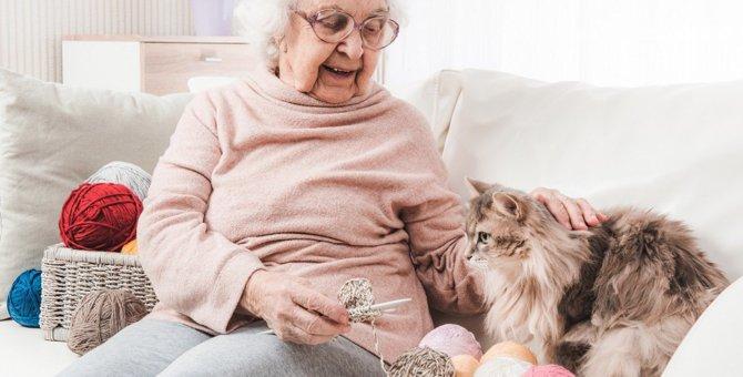 シニア期の猫のために心がけたい6つの健康維持法