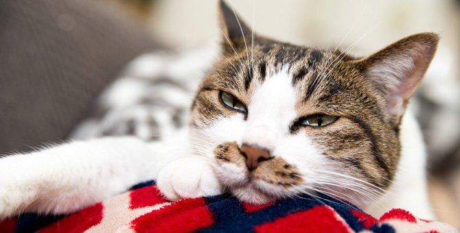 猫が『余計なお世話』と思っている飼い主の行為5つ