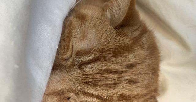 猫が『眠る場所』でわかる飼い主への信頼度3つ