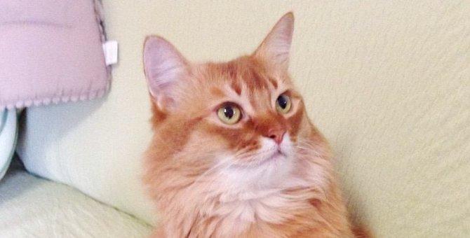 愛猫に聞く…安楽死を選ぶべきだった?|Laylaのペットリーディング
