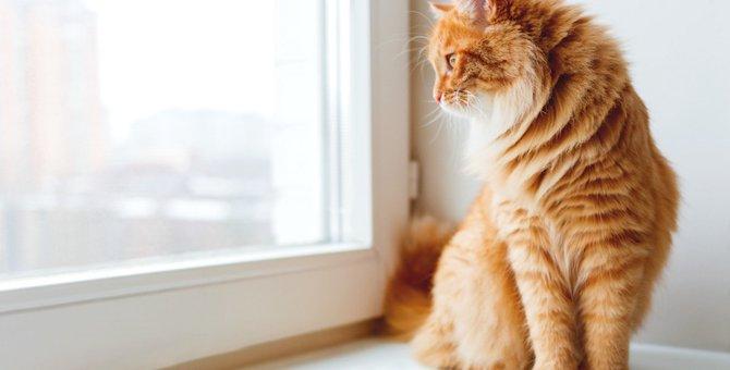猫が留守番できるのはどれぐらいの時間?注意しておく事