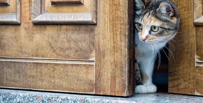 猫がドアを勝手に開ける!やめさせる5つの対策と注意