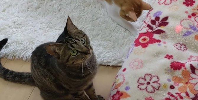 子供騙しはもう卒業?!レーザーポインターで見せる猫ちゃんの大人な対応