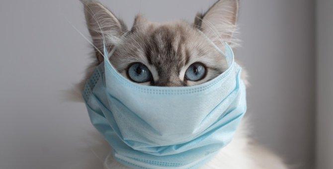 もしも愛猫が新型コロナに感染したら…検査は?病院に行っても良い?