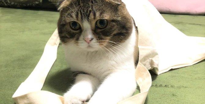 袋が大好きな欲張りな猫さん!