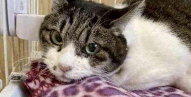 傷心で絶食状態になった2匹の猫…その悲しい背景とは?