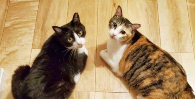 寒空の下で身を寄せ合う姉妹猫…ずっとのお家で最高の幸せを叶える!