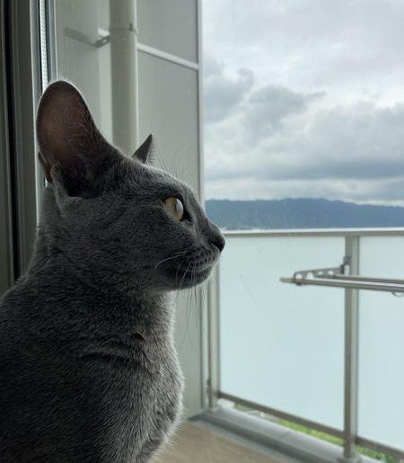 お外に出たいの?猫が窓の外を眺める理由4つ