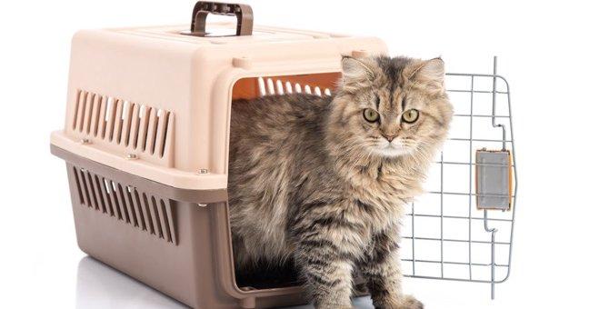 入院・出張など…猫を『他人に預けるとき』に注意すべき5つのこと