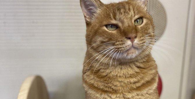猫の『キャットウォーク』をDIYするときの注意点4つ