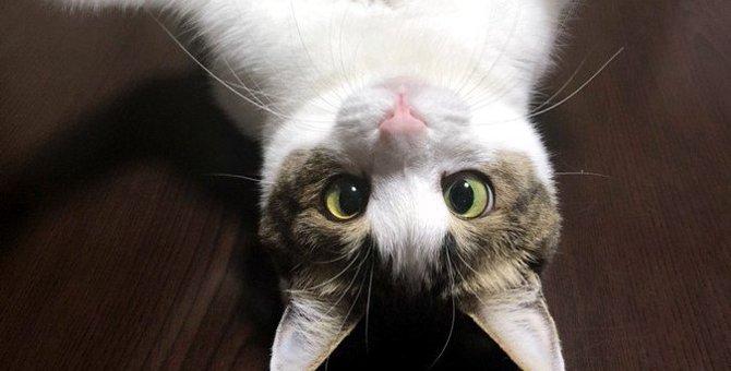 猫に『ノミ』がいた!正しい対処法4つと予防策