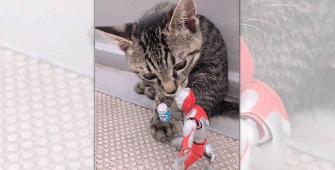 「熱中症注意ニャ」ウルトラマンを気遣いドリンクを差し出す子猫♡