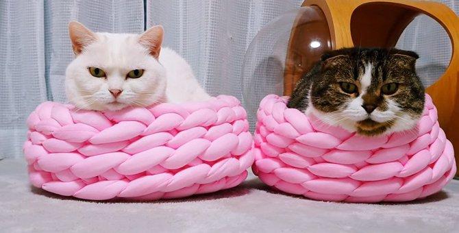 すっぽり♡新しいベッドを気に入った猫さんたちのほっこり風景