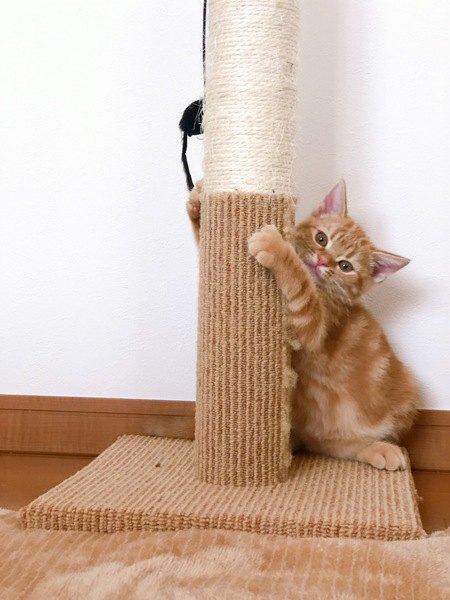 猫が爪とぎをする4つの理由と対策