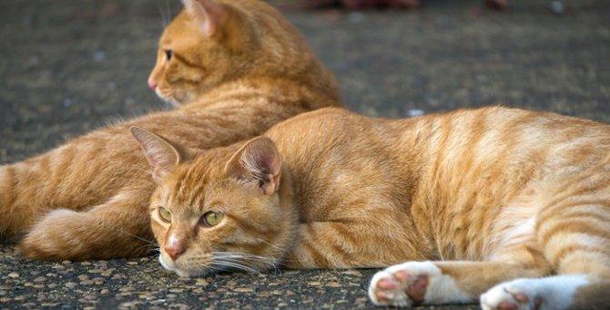 猫の去勢手術はした方がいい!?メリット・デメリットについて