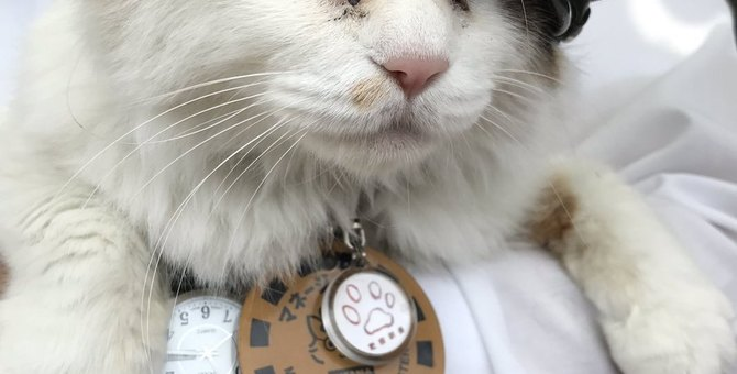 和歌山の猫カフェ6選!たま駅長のお店「たまカフェ」も紹介
