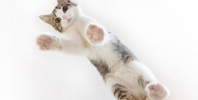 猫の足裏が汚くなる4つの理由とお手入れ方法