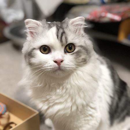 猫が確実に理解している人間の言葉5種