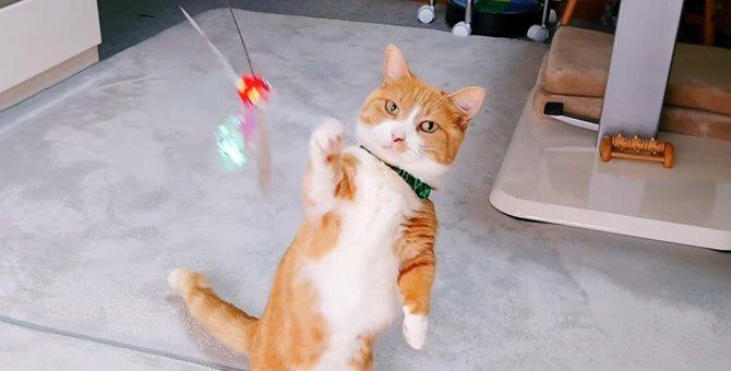 おとなしい猫さん「今日は遊んじゃうよ~♡」
